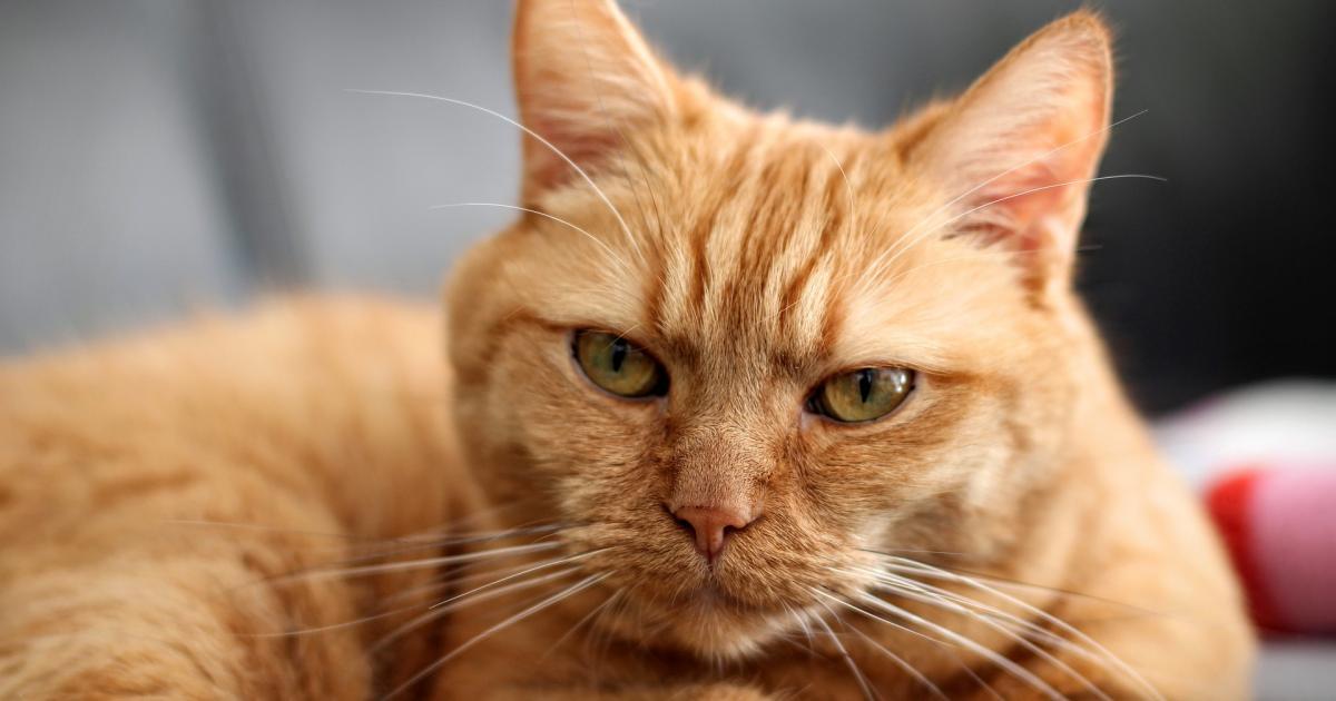 Trotz Katzenallergie mit einer Katze unter einem Dach